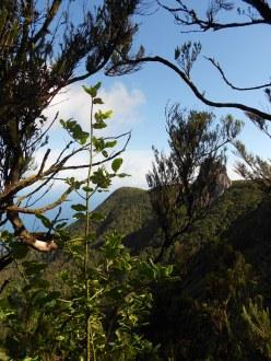 Natural scenes Anaga Park, Tenerife