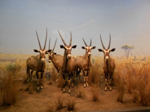Taxidermy heaven at the Museum of Natural History