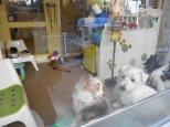 Wet Nose puppy daycare in Greenwich Village